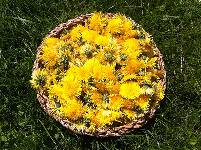 Fresh harvested flowers