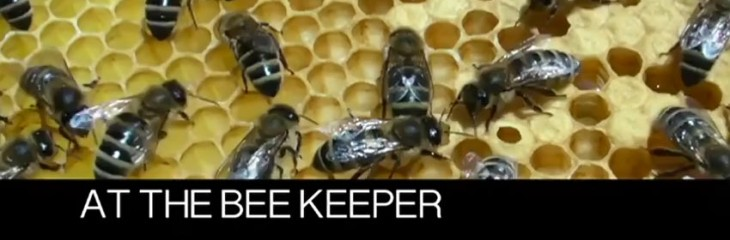 At the Bee Keeper
