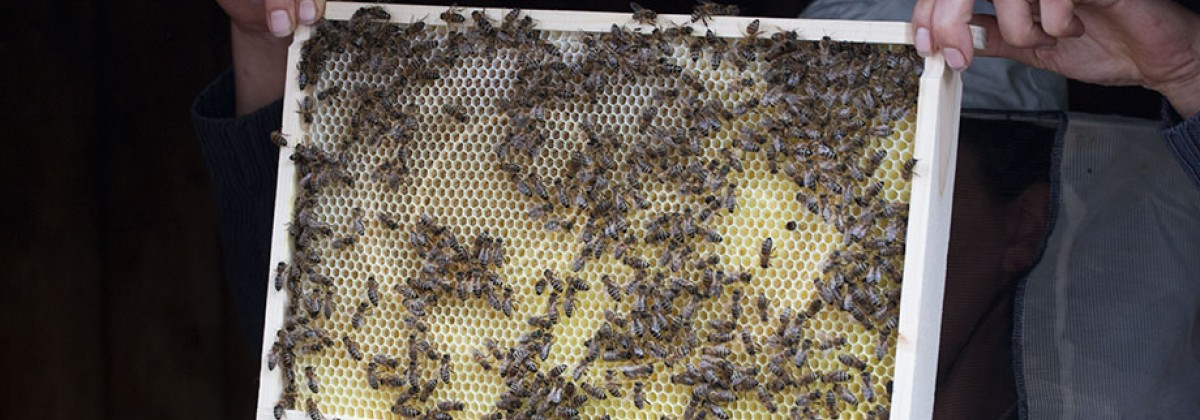 Bees are dying. Are neonicotinoids killing bees?