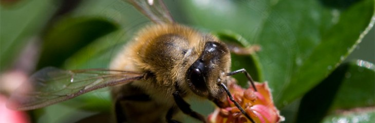 A look at the world without bees