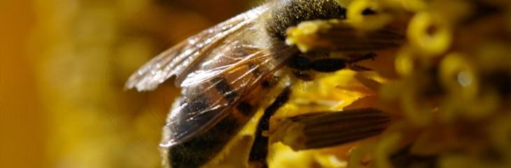 Enhancing the bees habitat